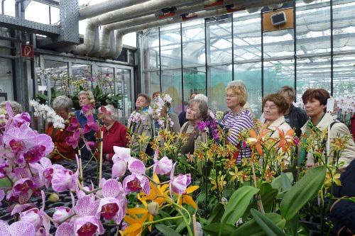 Orchideen-Zentrum Wichmann in Celle